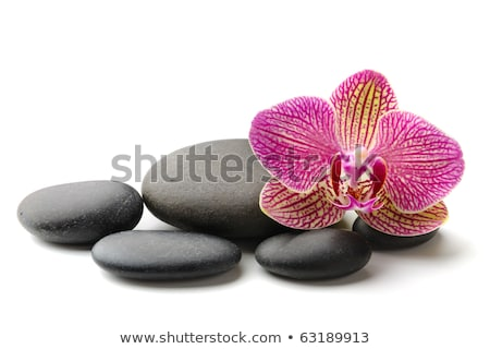 black spa stones and pink orchid flower isolated on white stock photo © tetkoren