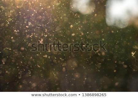 Virágpor szerkeszthető fű virág nyár mező Stock fotó © Tawng