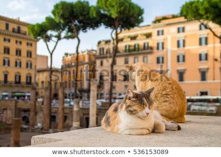 fórum · római · romok · Róma · Olaszország · oszlop - stock fotó © vladacanon