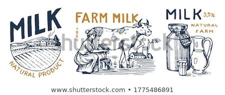 Dairy milk cow with sign Stock photo © bluering