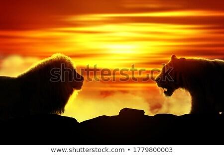 Cat Challenging a Lion Stock photo © kentoh