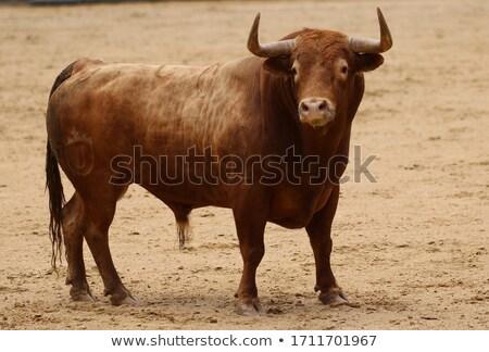 Big brown bull Stock photo © bluering