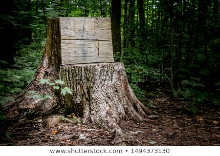 A forest with empty signboards Stock photo © bluering