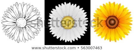 Different drafts of sunflower Stock photo © bluering