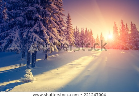 Beautiful winter sunset. Carpathians. National park Stock photo © tekso