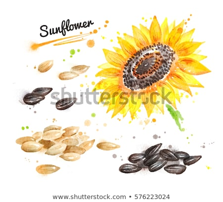 Watercolor sunflower and pile of seeds Stock photo © Sonya_illustrations