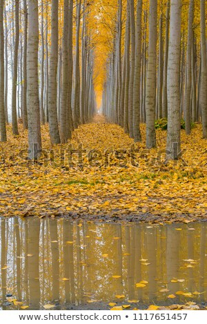 Reflection at Poplar Tree Farm in Boardman Oregon Stock photo © davidgn