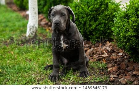 Foto stock: Belo · cachorro · branco · feminino · cão