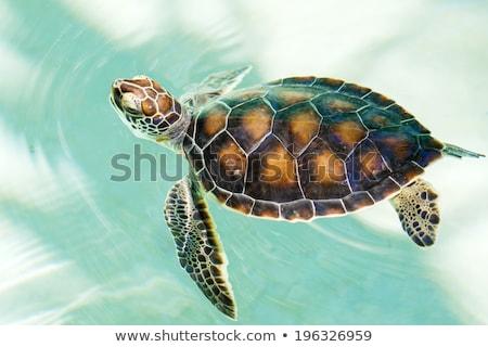 Stock fotó: úszik · halfajok · türkiz · víz · iskola · mediterrán