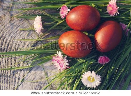 Пасха гнезда зеленый пасхальных яиц счастливым Сток-фото © Zerbor