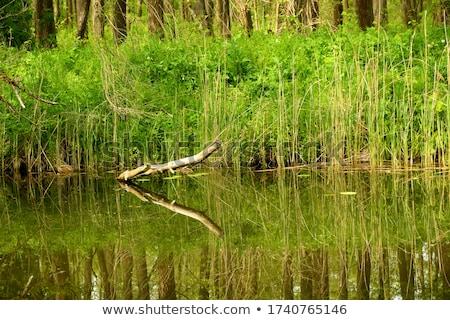 Podziale oddziału czarny bezlistny naturalnych Zdjęcia stock © simply