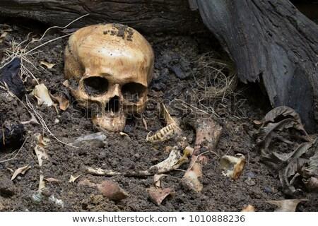 Terreno osso natureza ilustração folha arte Foto stock © bluering