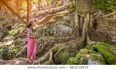 Sarong on the sacred tree, Bali, Indonesia Stock photo © galitskaya