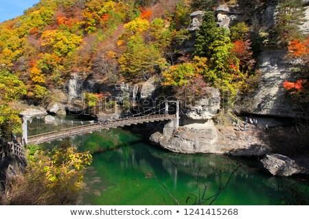 нет Япония утес реке каньон лес Сток-фото © vichie81