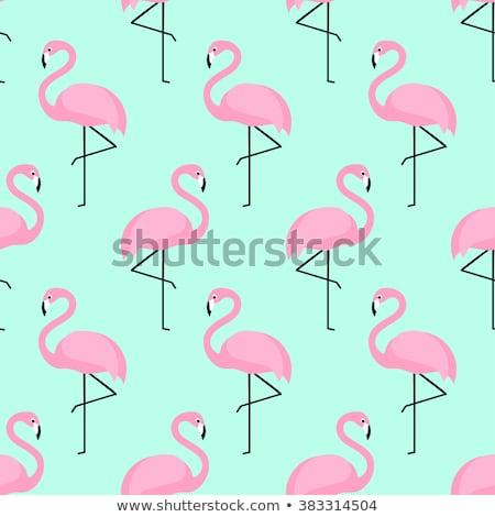 flamingo · ilustração · rosado · vermelho · pé · rosa - foto stock © cienpies