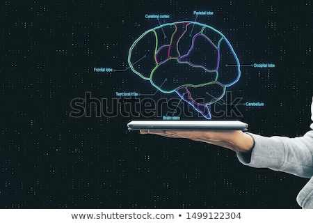 Diagnostics on tablet with brain functionality concept Stock photo © ra2studio