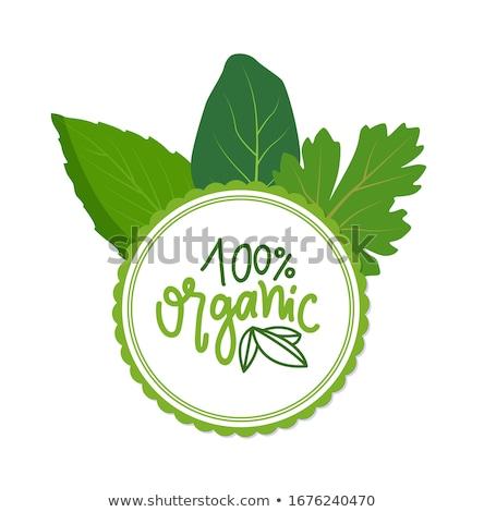 kitchen herbs framing eco products organic logo stock photo © robuart