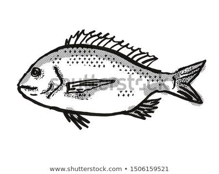 Ezüst ausztrál hal rajz retro rajz Stock fotó © patrimonio