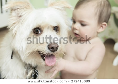 I think that is mine ball! 9 months old Baby and Dog playing on Stock photo © Lopolo