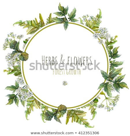 Greeting card with fresh natural flowers frame. Stock photo © artjazz
