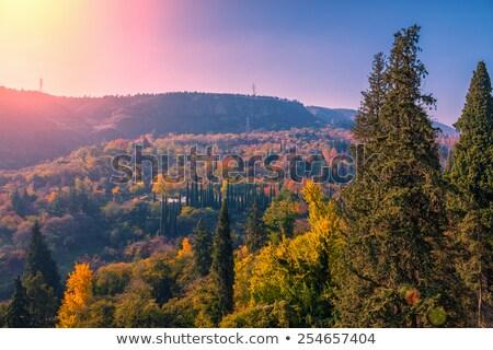 Jardim botânico Geórgia ver madeira floresta Foto stock © borisb17