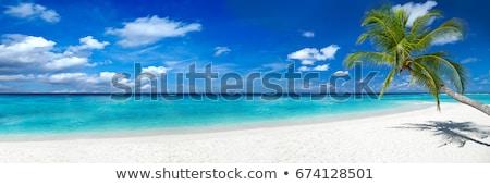 Tájkép tengerpart esernyő pálma fák napfelkelte Stock fotó © bbbar