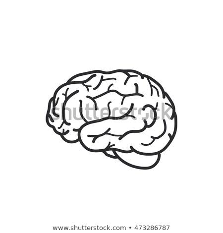 Simples preto cérebro humano ícone sombra cinza Foto stock © evgeny89