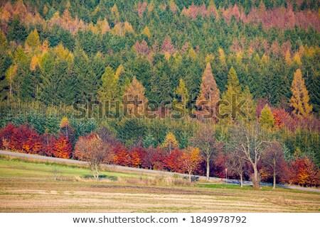 Belle feuillus arbres plein couleur automne Photo stock © lovleah