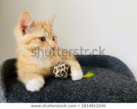 cute white kitten with mouse stock photo © tromboneart