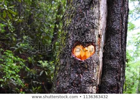 madeira · popular · arte · trabalhador · humanismo · decoração - foto stock © njaj