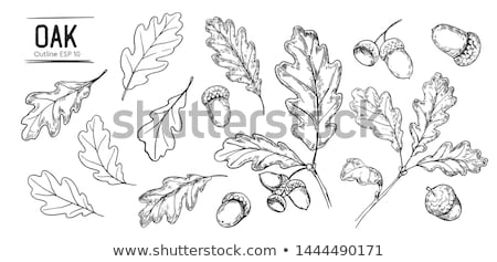 nozes · folhas · branco · fresco · semente - foto stock © mobi68