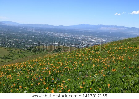 Rocky Mountain Foothills Stock photo © brm1949