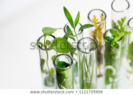green plants in laboratory equipment stock photo © deyangeorgiev