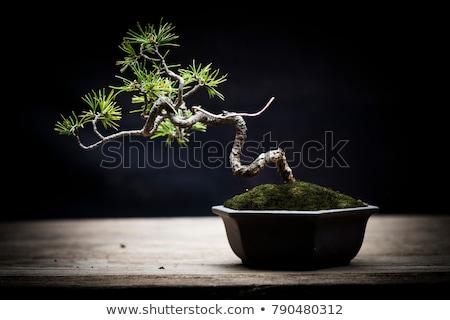 オリエンタル · アイリス · 医療 · 自然 · 白 - ストックフォト © sahua