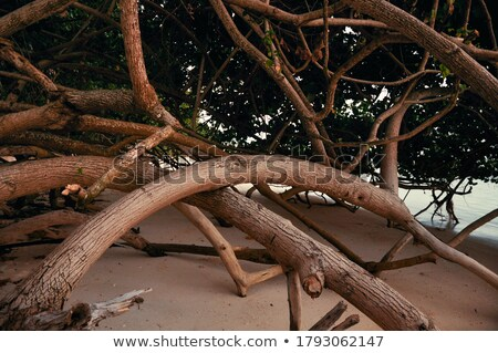 beautiful structured wooden roots at the beach  Stock photo © meinzahn