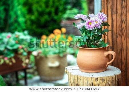 rojo · blanco · primavera · belleza · otono · regalo - foto stock © sfinks