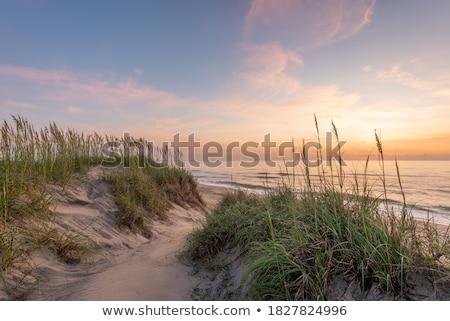 Sandy dune covered with the grass Stock photo © marekusz