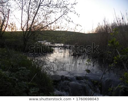 Klein stream bos winter winterseizoen hout Stockfoto © ankarb