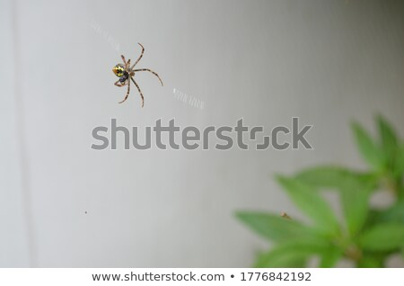 Garden spider stock photo © manfredxy