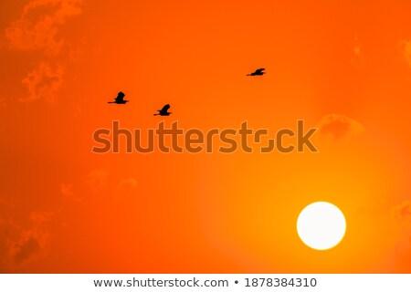 劇的な 午前 日の出 雲 輝かしい オレンジ ストックフォト © skylight