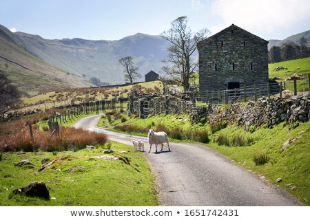 country lane in the lakes Stock photo © chris2766