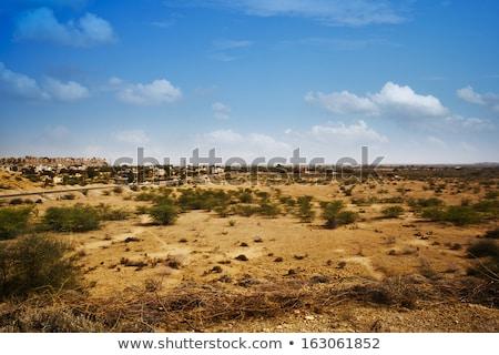 Bush growing on arid landscape, Jaisalmer, Rajasthan, India Stock photo © imagedb