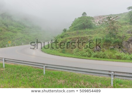 country road through olive and pine trees Stock photo © sirylok