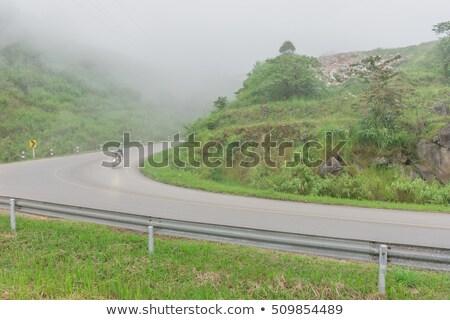 Vidéki út olajbogyó fenyőfa fák hegy vidéki táj Stock fotó © sirylok