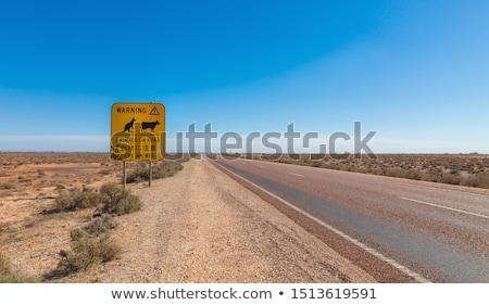 Outback Cows  Stock photo © artistrobd