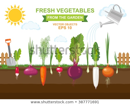 Different kinds of plants growing in the garden Stock photo © bluering