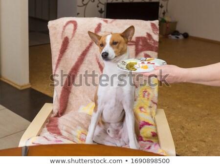 Kutya előadás pozició aranyos nyár fiatal Stock fotó © goroshnikova