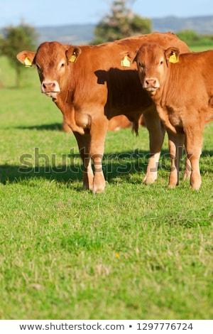 фермы сцена животные иллюстрация дерево дизайна Сток-фото © bluering