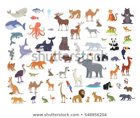 Grande aquático animal branco comida fundo Foto stock © bluering