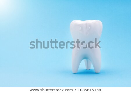 Gyönyörű fog anatómia egészséges fehér csont Stock fotó © Tefi